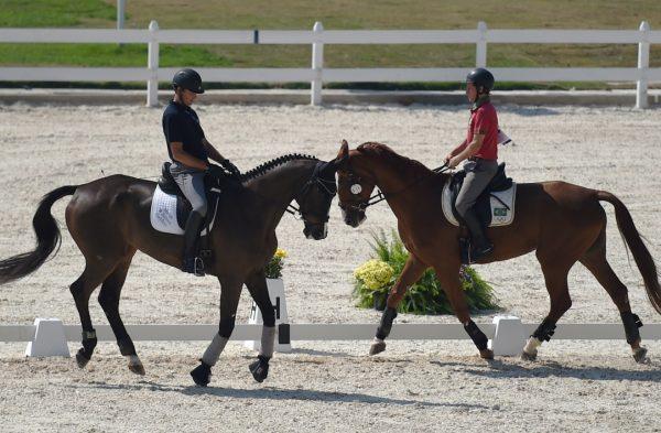 Équitation : Ce qui est nécessaire pour devenir un cavalier